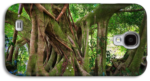Kipahulu Banyan Tree Galaxy S4 Case by Inge Johnsson