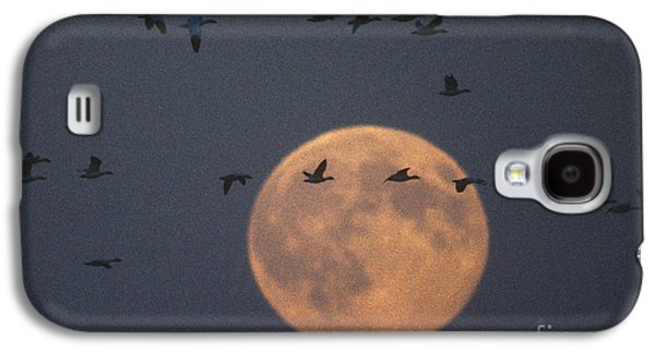Snow Geese Galaxy S4 Case by James L. Amos