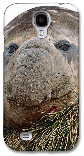 Southern Elephant Seal (mirounga Leonina Galaxy S4 Case by Martin Zwick