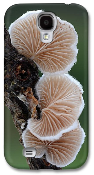 Variable Oysterling Fungus Galaxy S4 Case by Nigel Downer