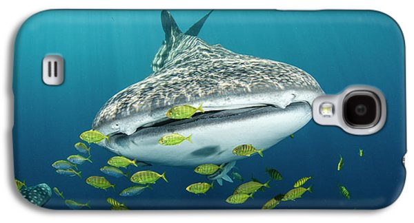 Whale Shark And Golden Trevally Galaxy S4 Case