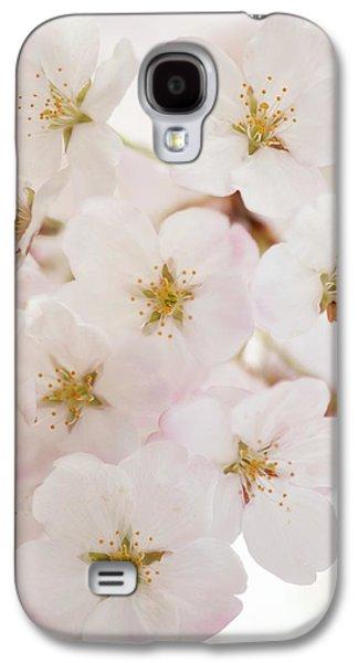 Yoshino Cherry (prunus X Yedoensis) Galaxy S4 Case by Maria Mosolova