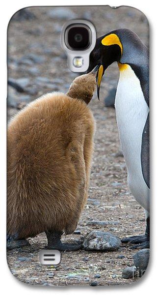 King Penguins Galaxy S4 Case by John Shaw