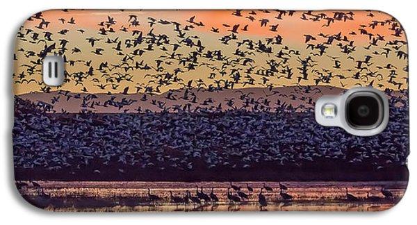 Usa, New Mexico, Bosque Del Apache Galaxy S4 Case by Jaynes Gallery