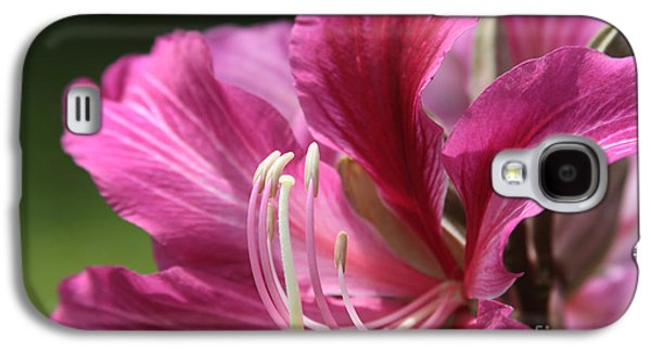 Bauhinia Blakeana - Hong Kong Orchid - Hawaiian Orchid Tree  Galaxy S4 Case by Sharon Mau