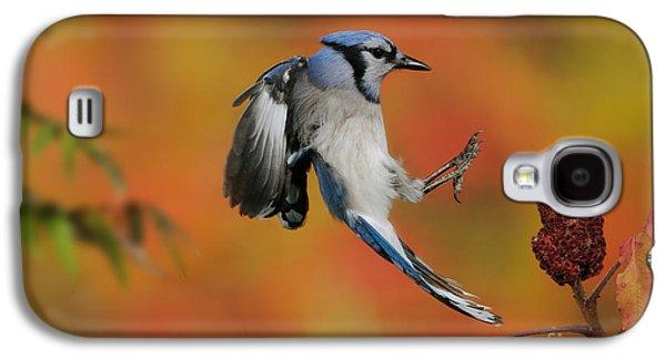 Blue Jay Galaxy S4 Case