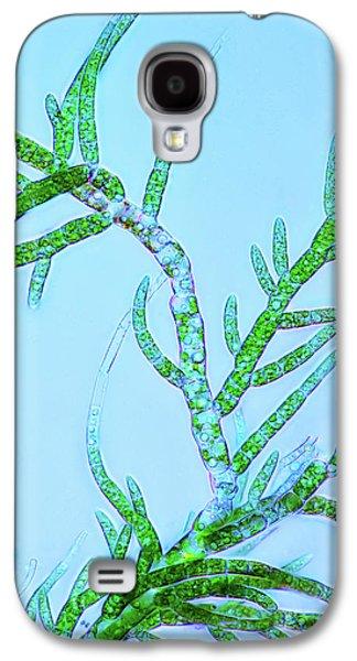Draparnaldia Green Algae Galaxy S4 Case by Marek Mis