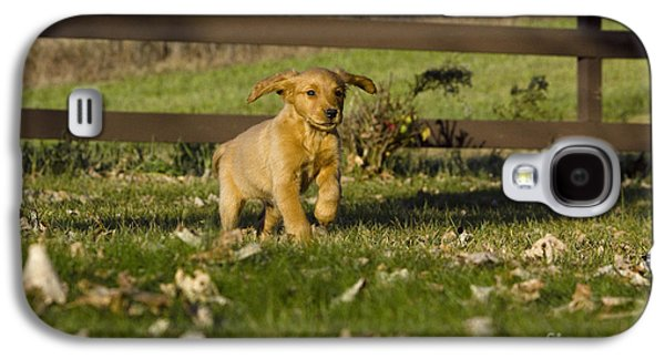 Golden Retriever Pup Galaxy S4 Case by Linda Freshwaters Arndt