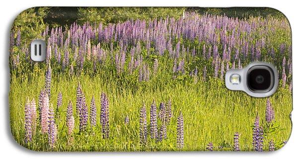 Maine Wild Lupine Flowers Galaxy S4 Case
