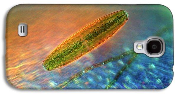 Netrium Desmid Galaxy S4 Case