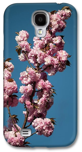 Prunus Serrulata 'kanzan' Galaxy S4 Case by Maria Mosolova