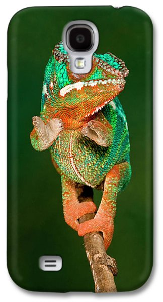Rainbow Panther Chameleon, Fucifer Galaxy S4 Case