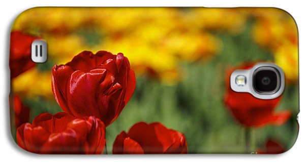 Red And Yellow Tulips Galaxy S4 Case by Nailia Schwarz