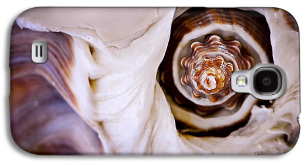 Seashell Detail Galaxy S4 Case by Elena Elisseeva