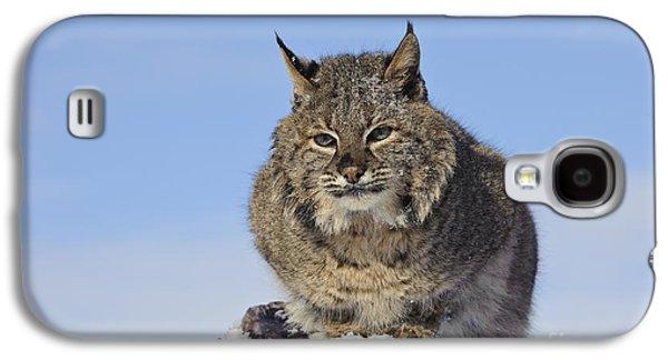 Bobcat Galaxy S4 Case by John Shaw