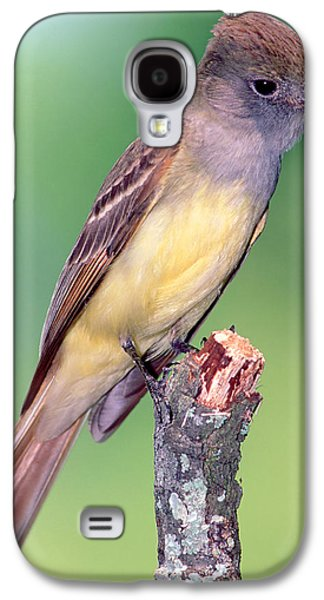 Great Crested Flycatcher Galaxy S4 Case
