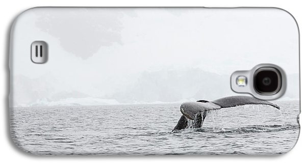 Humpback Whales Feeding On Krill Galaxy S4 Case by Ashley Cooper