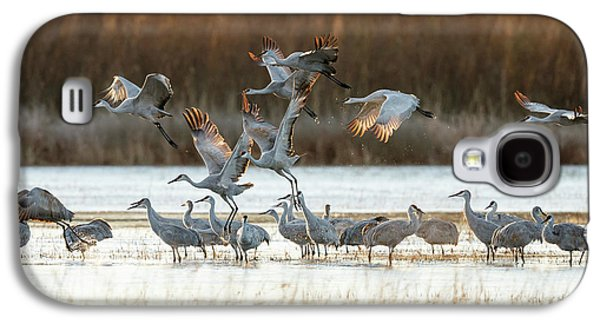 Sandhill Cranes Flying, Grus Galaxy S4 Case by Maresa Pryor