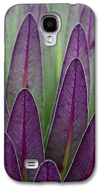 The Giant Lobelias (lobelia Bequaertii Galaxy S4 Case