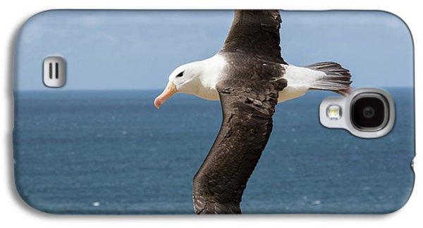 Black-browed Albatross (thalassarche Galaxy S4 Case