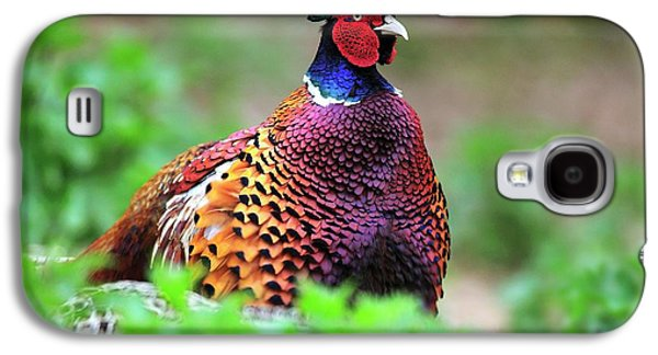 Male Common Pheasant Galaxy S4 Case