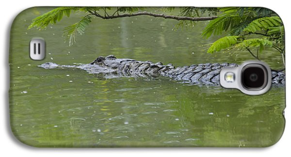 American Alligator Galaxy S4 Case by Mark Newman