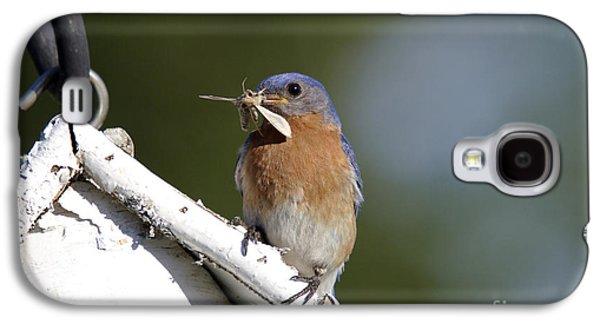 Feeding Young Galaxy S4 Case - Eastern Bluebird by Linda Freshwaters Arndt