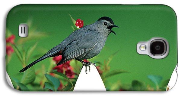 Gray Catbird (dumetella Carolinensis Galaxy S4 Case by Richard and Susan Day