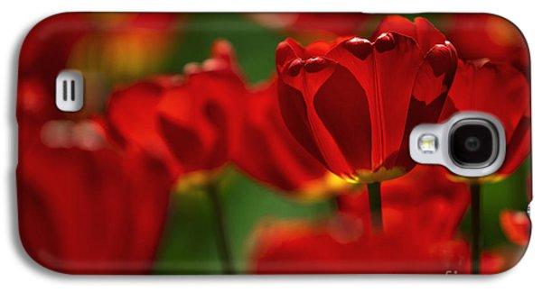 Red And Yellow Tulips Galaxy S4 Case