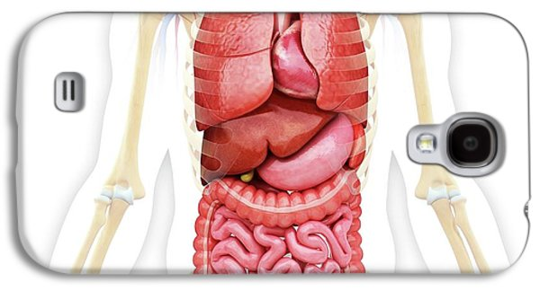 Human Internal Organs Galaxy S4 Case by Pixologicstudio