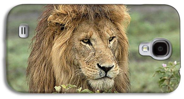 Africa, Tanzania, Serengeti Galaxy S4 Case
