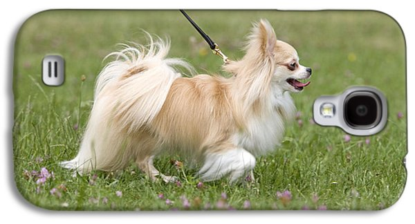 Long-haired Chihuahua Galaxy S4 Case by Jean-Michel Labat
