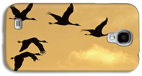 Sandhill Cranes (grus Canadensis Galaxy S4 Case by William Sutton