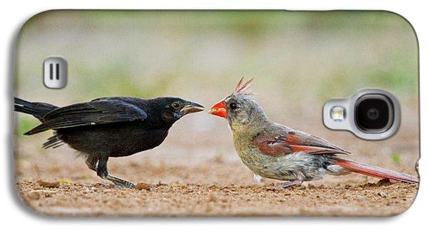 Northern Cardinal (cardinalis Cardinalis Galaxy S4 Case by Larry Ditto