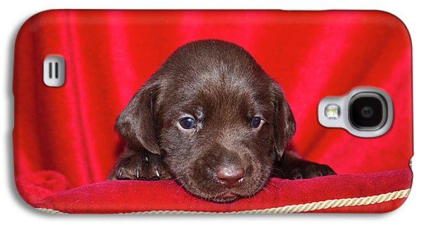 A Chocolate Labrador Retriever Puppy Galaxy S4 Case by Zandria Muench Beraldo