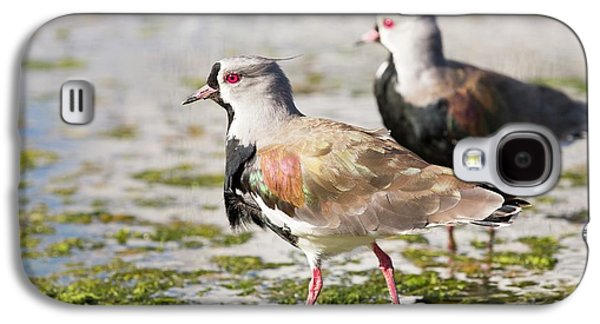 A Flock Of Southern Lapwings Galaxy S4 Case