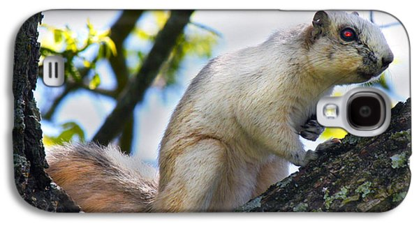 A Fox Squirrel Pauses Galaxy S4 Case by Betsy Knapp