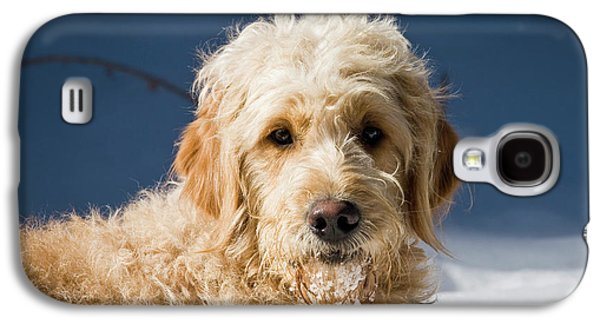 A Goldendoodle Lying In The Snow Bathed Galaxy S4 Case by Zandria Muench Beraldo
