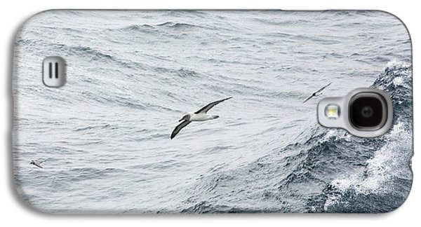A Grey Headed Albatross Galaxy S4 Case by Ashley Cooper