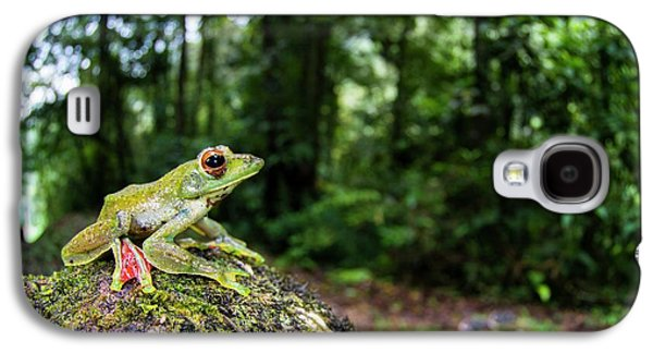 A Malayan Flying Frog Galaxy S4 Case by Scubazoo