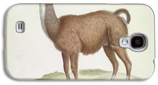 Llama Galaxy S4 Case - A Male Llama by British Library