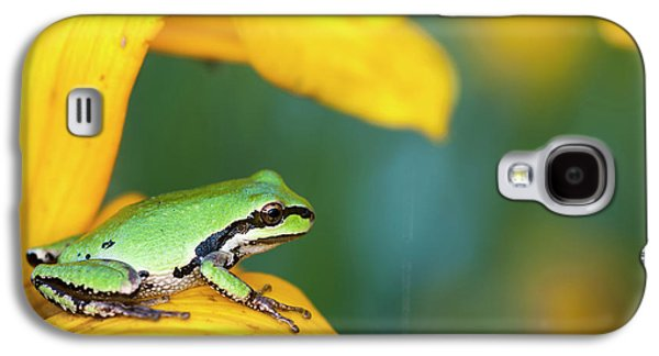 A Pacific Tree Frog  Pseudacris Regilla Galaxy S4 Case by Robert L. Potts
