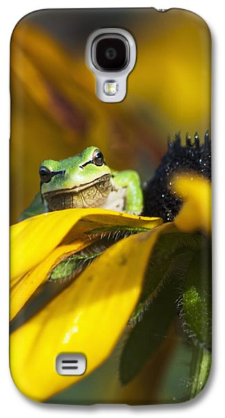 A Pacific Treefrog Looks For Flies Galaxy S4 Case by Robert L. Potts