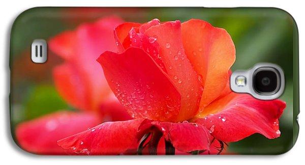 A Tintinara Rose In The Rain Galaxy S4 Case by Rona Black