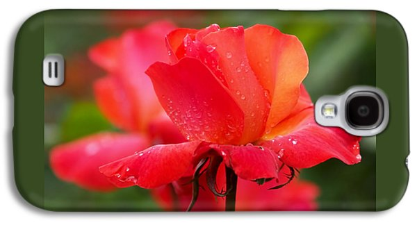 A Tintinara Rose In The Rain Galaxy S4 Case by Rona Black