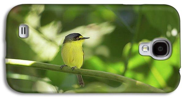 Flycatcher Galaxy S4 Case - A Yellow-lored Tody Flycatcher by Alex Saberi