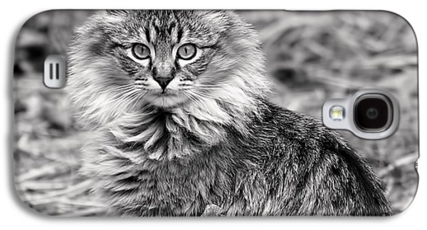 A Young Maine Coon Galaxy S4 Case