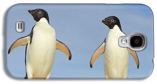 Adelie Penguin Duo Galaxy S4 Case by Yva Momatiuk John Eastcott