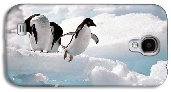 Adelie Penguins Galaxy S4 Case