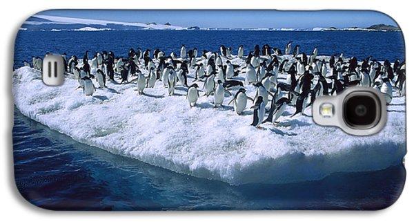 Adelie Penguins On Icefloe Antarctica Galaxy S4 Case